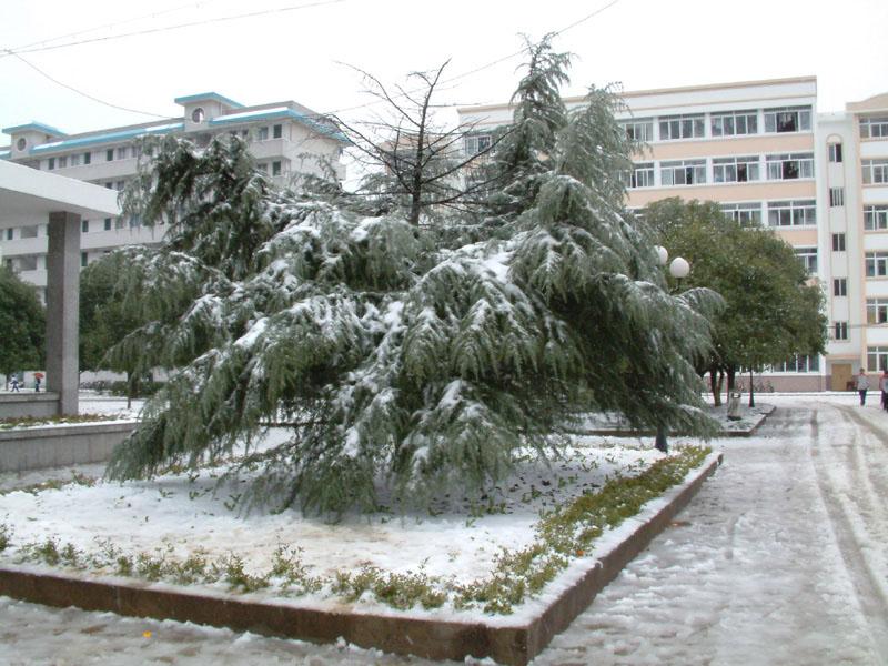 桂林理工大学 雪压青松图片